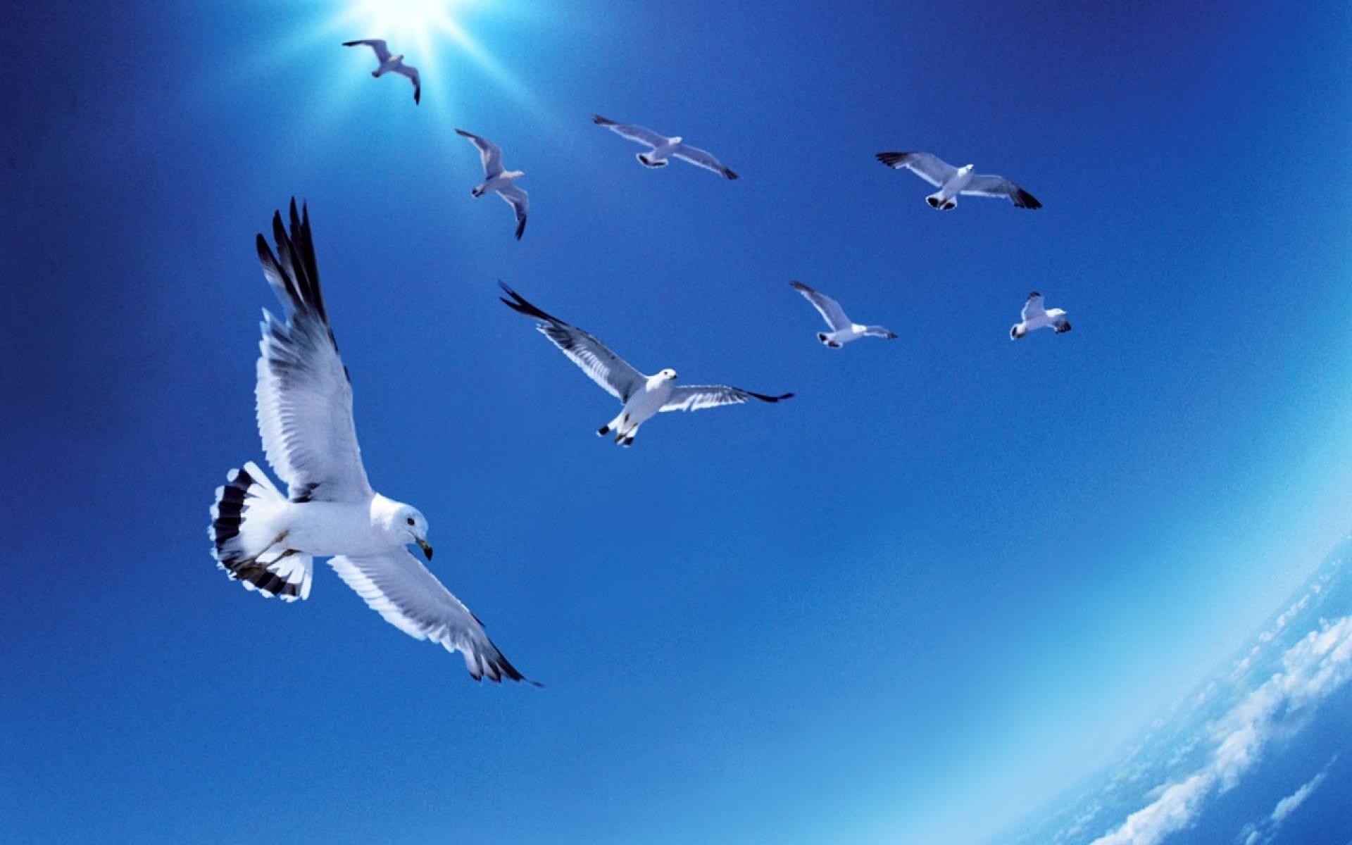 Constelação Familiar e o voo dos pássaros em grupo.